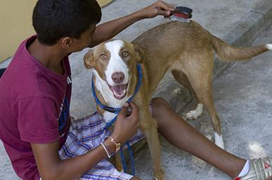Terapia con perros - proyecto Quererlos para quererme