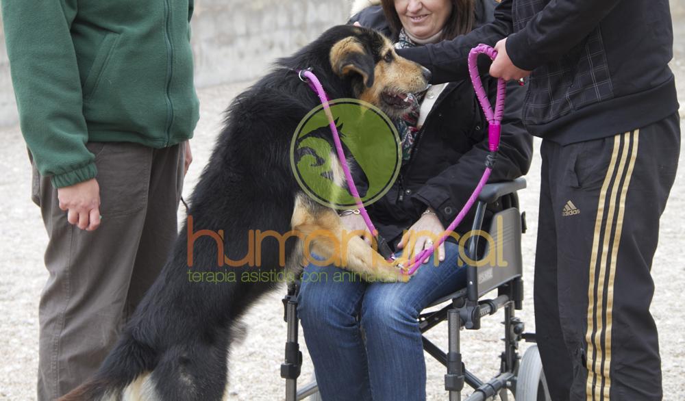 Humanymal_Terapia_Asistida_con_Animales_2013_04