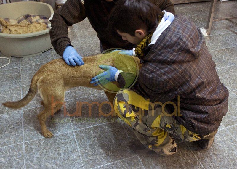 Humanymal_Terapia_con_animales