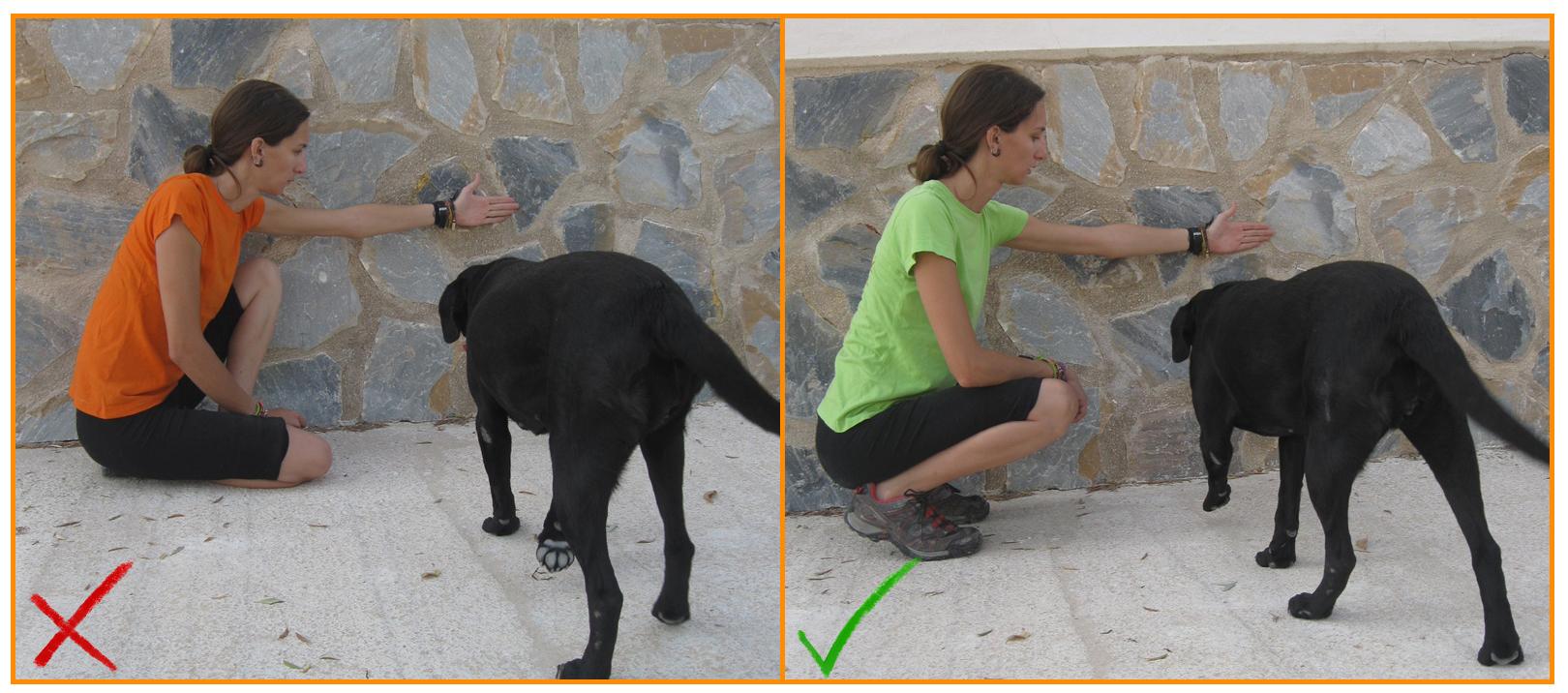 Humanymal_Terapia_Asistida_con_Animales_000