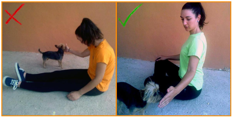 Humanymal_Terapia_Asistida_con_Animales_006