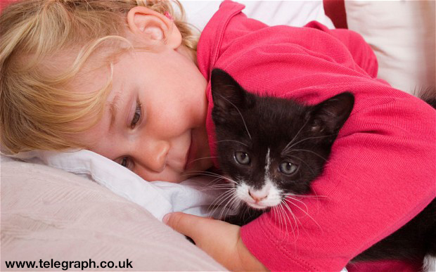 B8N424 little girl toddler playing with black kitten